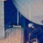 10-beauty-ocsr-elevator-shaft-1-3-14