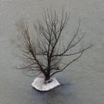 The Island Tree 1-11-14