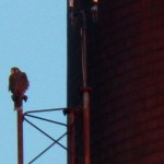 Juvie Peregrine - Maybe Billy - at Russell Station 2-28-14