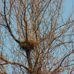 Neighborhood RTH Nest -4-12-14