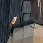 16-dotca-on-nw-wing-ledge-tsb-5-27-14