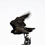img_0020-take-off