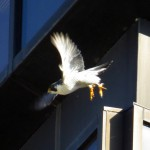 img_0076-whitey-in-flight