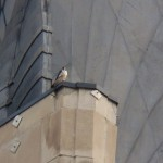 11-dotca-on-ne-wing-ledge-tsb-6-25-14