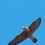 3-mercury-flying-overhead-6-27-14