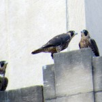 img_0087-bro-and-sis-on-parapet