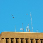 Three Juvies Flying High Over Xerox 7-16-14