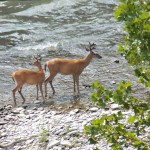 13-two-bucks-in-the-gorge-7-26-14