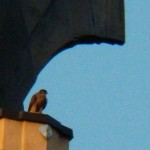 6-juvie-on-tsb-sw-wing-ledge-7-21-14