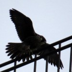 img_0043-nothing-wrong-with-those-wings