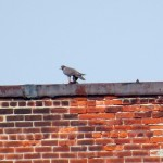 img_0171-juvie-on-east-side-wilder-roof-eating