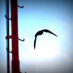 img_0008-dc-takes-off