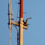 img_0011-beauty-on-rgs-antenna