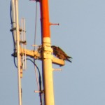 img_0013-beauty-on-rgs-antenna-seen-from-inn-at-broadway