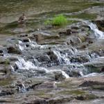 img_0013-ducks-and-little-falls