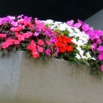 img_0020-flowers-at-xerox