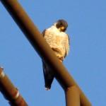 img_0028-watching-little-birdies