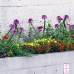 img_0036-flower-bed-at-martin-luther-king-jr-park