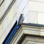 img_0044-dc-watching-beauty-fly