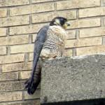 img_0046-st-bird-right-profile