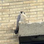 img_0047-st-bird-left-profile