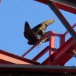 img_0055-nore-knocks-tesh-off-rail