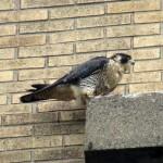 img_0064-st-bird