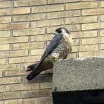 img_0065-st-bird-asleep-again