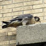 img_0072-st-bird