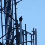 img_0074-osprey