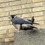 img_0075-st-bird