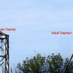 img_0085-mudlock-osprey