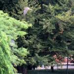 img_0092-nore-flies-past-aqueduct-park
