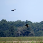 img_0095-2-eagles