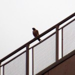 img_0003-falcon-at-st-this-morning