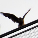 img_0014-ready-to-take-off
