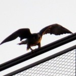 img_0017-about-to-take-off