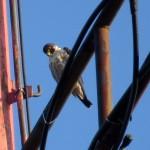 img_0059-watching-birdies-below