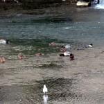 img_0053-ducks
