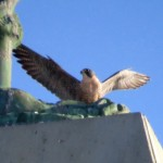 img_0042-dc-hovering