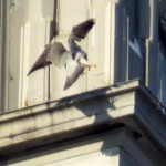 img_0044-landing-gear-down