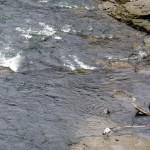 img_0067-rapids