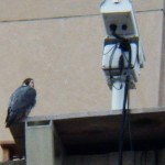 Dot.ca at the Nest Box on TSB 12-20-14