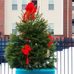 Small City Christmas Tree 12-14-14