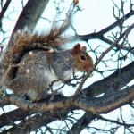 Squirrel! 1-25-15