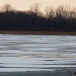 Snowy on Buck Pond 1-18-15