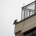 img_0017-falcon-power