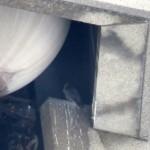 img_0025-dc-with-one-eye-lid-shut
