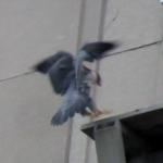 beauty-landing