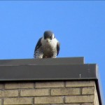 img_0098-billie-looks-at-99-below-her-on-window-ledge
